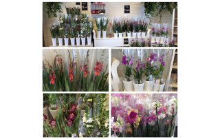 Vackra orkidéer på BlomExtra